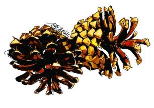 moo_card_pine-cones