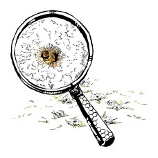 """One of several illustrations produced for the North Carolina State University's """"Your Wildlife"""" """"Students Discover"""" citizen science project focused on studying the impacts of bee germs on native bee populations"""